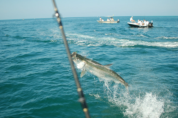 Boca Grande and Fort Myers Tarpon Fishing